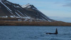 Whale Watching Grundarfjörður
